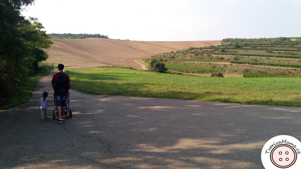 Trip in the region of South Moravia